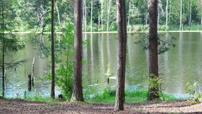Movement of water on a beautiful forest lake stock video footage