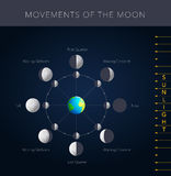 Movements of the moon vector Stock Photography