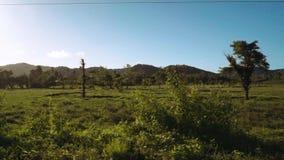Movendo-se através do campo na frente dos montes em Siargao, Filipinas video estoque