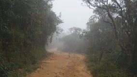 Mover-se ao longo do trajeto da montanha entre a caminhada tropical do ponto de vista da floresta através do trajeto da floresta  filme