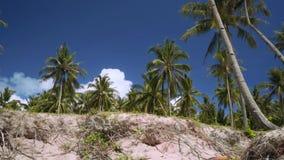 Mover-se da areia para palmeiras filme
