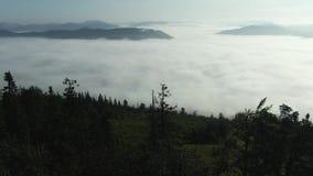 Mover-se para a frente para a floresta das madeiras de pinho e o vale da montanha com o alargamento do sol no dia de ver?o Nature filme