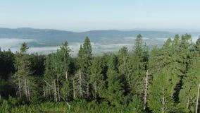 Mover-se para a frente para a floresta das madeiras de pinho e o vale da montanha com o alargamento do sol no dia de ver?o Nature vídeos de arquivo