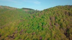 Mover-se para a frente para a floresta das madeiras de pinho e o vale da montanha no dia de verão Montanhas verdes exteriores do  video estoque