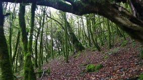 Mover-se pelo trajeto através da floresta místico selvagem vídeos de arquivo