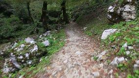Mover-se pelo trajeto através da floresta selvagem vídeos de arquivo