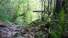 Mover-se pelo trajeto através da floresta selvagem video estoque