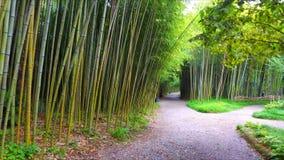 Mover-se pelo trajeto de bambu vídeos de arquivo