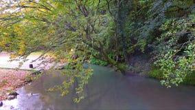 Mover-se sobre o fluxo da angra da floresta vídeos de arquivo