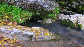 Mover-se sobre o fluxo da angra da floresta filme