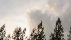 Mover-se superior dos pinheiros no vento vídeos de arquivo
