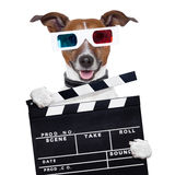 Movie clapper board 3d glasses dog. Watching Stock Photos
