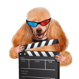 Movie clapper board director dog. Royalty Free Stock Images
