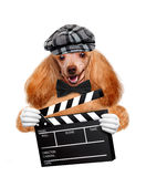 Movie clapper board director dog. Stock Photos