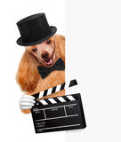 Movie clapper board director dog. Stock Image