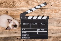 Movie clapperboard and cat. On wood Stock Photography