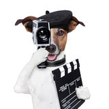 Movie director dog. With a vintage camera stock photography