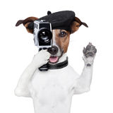 Movie director dog. With a vintage camera Stock Photo
