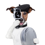 Movie director dog. With a vintage camera Stock Images