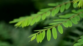 Movie of leaves stock video footage