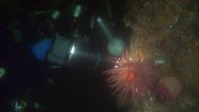 Movie operator on background seabed underwater in ocean of Alaska. stock footage