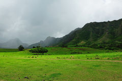 Movie scenes from kahana valley Stock Photography