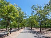 Movimentação alinhada da árvore Imagem de Stock Royalty Free