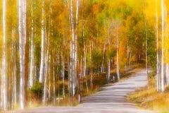 Movimentação cênico através das árvores de Aspen Imagem de Stock
