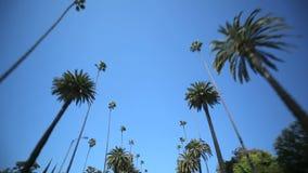 Movimentação da palmeira filme