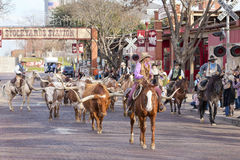Movimentação do gado dos Longhorns nos currais de Fort Worth fotografia de stock