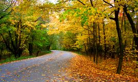 Movimentação do outono Imagens de Stock Royalty Free
