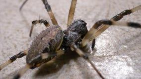 Movimenti del ragno lentamente stock footage
