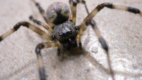 Movimenti del ragno lentamente archivi video