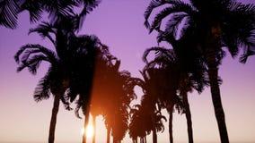 Movimento ao longo da aleia das palmeiras no fundo video estoque