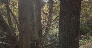 Movimento ascendente com o guindaste dos troncos das árvores vídeos de arquivo
