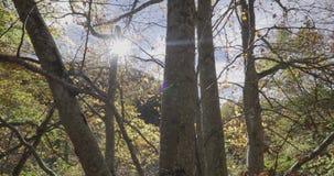 Movimento ascendente com o guindaste perto dos troncos das árvores e do sol na parte dianteira vídeos de arquivo