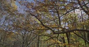 Movimento ascendente com ramos das árvores perto de nós filme