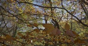 Movimento ascendente com ramos e folhas das árvores muito próximas a nós vídeos de arquivo
