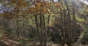 Movimento ascendente da terra alle foglie video d archivio