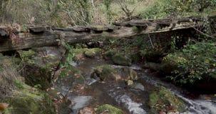 Movimento ascendente que começa em um rio e que stoping vendo a parte superior de uma ponte de madeira velha de um rio cercado po vídeos de arquivo