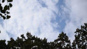 Movimento bianco delle nuvole sopra le cime degli alberi video d archivio