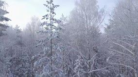 Movimento coberto de neve de tiro da floresta da câmera a partir de baixo vídeos de arquivo