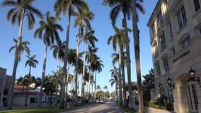 Movimento da câmera através da aleia da palma real em West Palm Beach, Florida