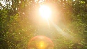 Movimento da câmera do trajeto de pedra à luz solar brilhante no fundo vídeos de arquivo
