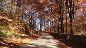 Movimento da câmera na estrada na floresta do outono e no sol que brilha através da folha vídeos de arquivo