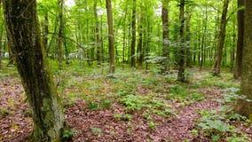 Movimento da câmera na floresta filme