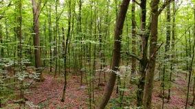 Movimento da câmera na floresta video estoque
