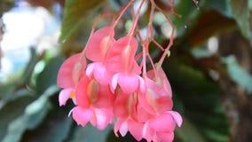 Movimento da flor cor-de-rosa e vermelha vídeos de arquivo