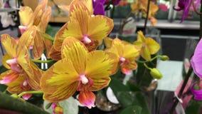 Movimento da flor da orquídea da exposição dentro das economias na loja de alimentos filme