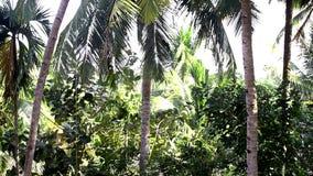 Movimento da parte superior alta da palmeira do coco com o homem a moer filme
